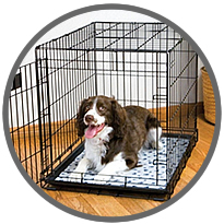 Top 7 Best Dog Crates